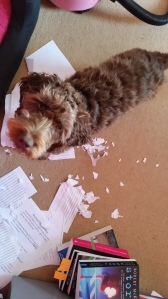 Lexi thought the early drafts of my work were rubbish too!
